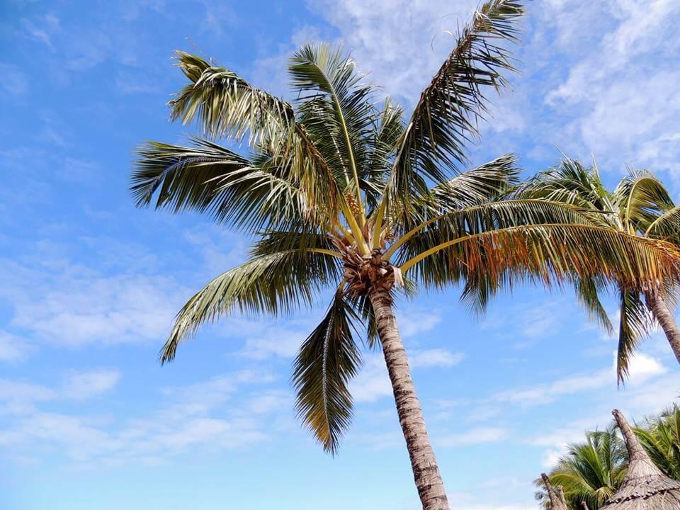 palma a Mauritius