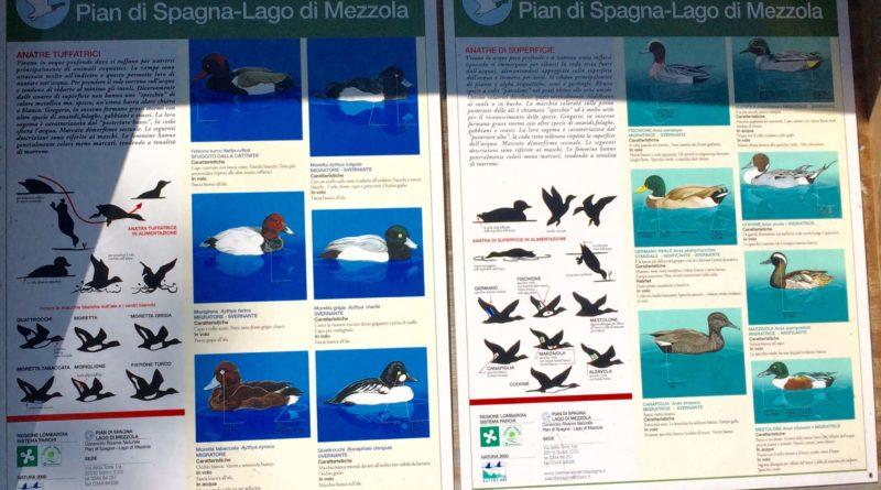 Lago di Como birdwatching