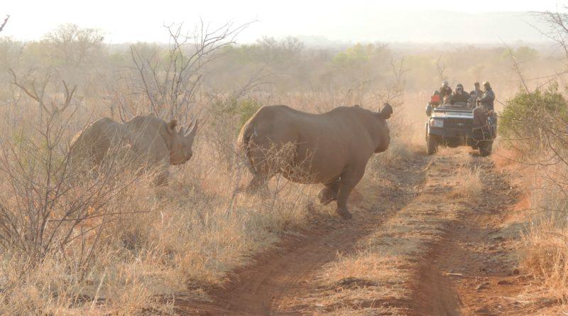 safari in una riserva privata in Sudafrica