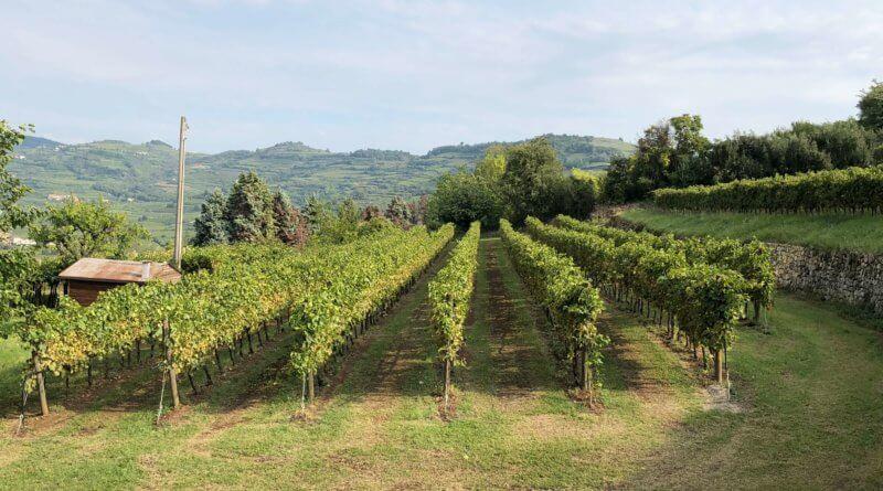 soave borgo vino