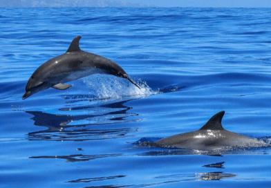dove vedere i delfini e altri cetacei