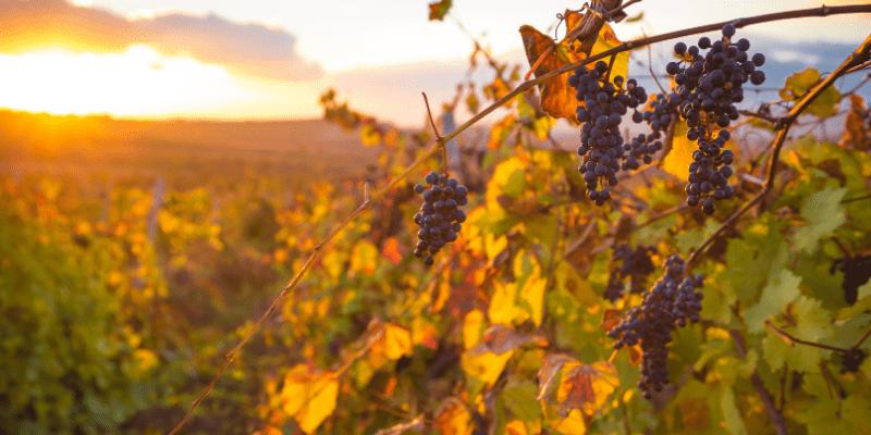 strada del vino in trentino alto adige