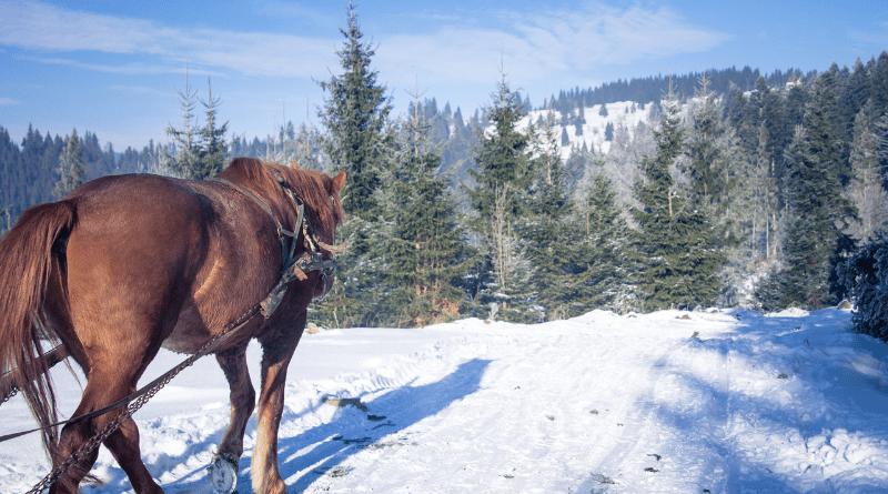 slitta trainata da cavalli in val pusteria